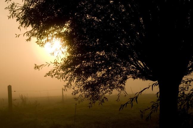 Het vlaamse landschap vroeg in de morgen