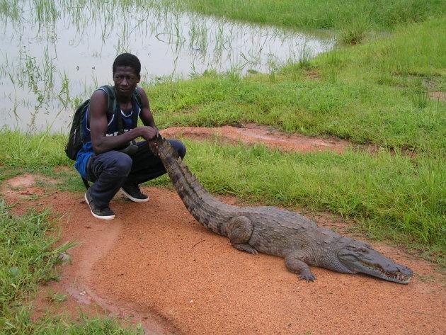 Heilige krokodil in Paga
