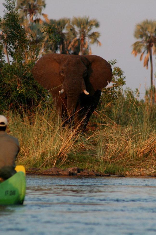olifant tijdens kanotocht