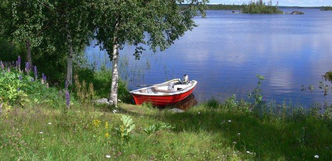 meertje in de buurt van Kiruna