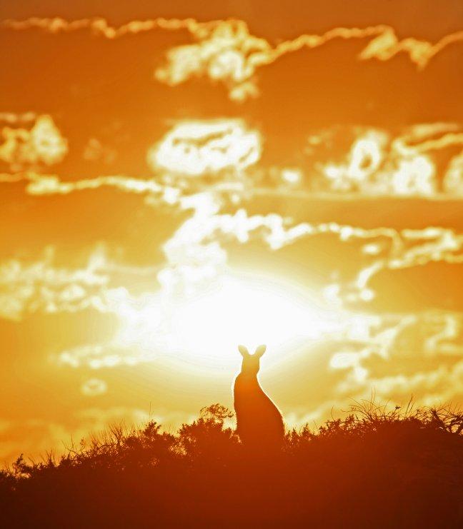 Sunset Skippy