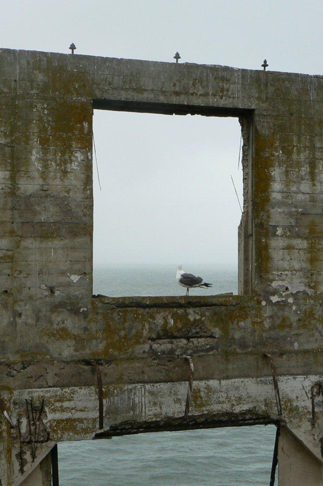 meeuw op Alcatraz
