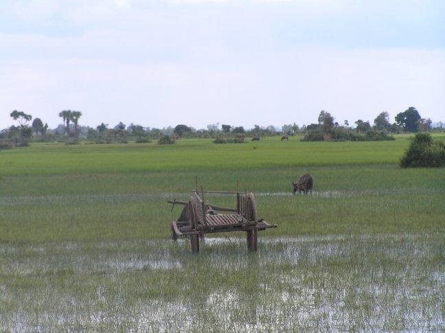 rijstvelden.