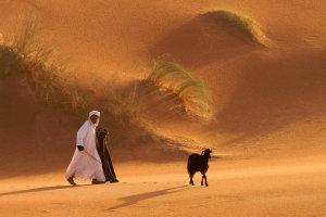 Woestijngeit