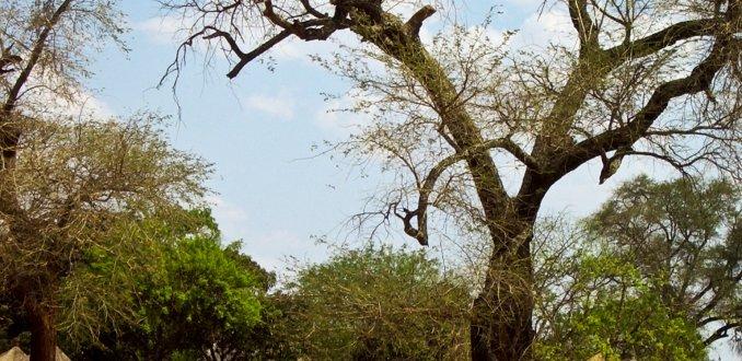 Zambiaans dorpje