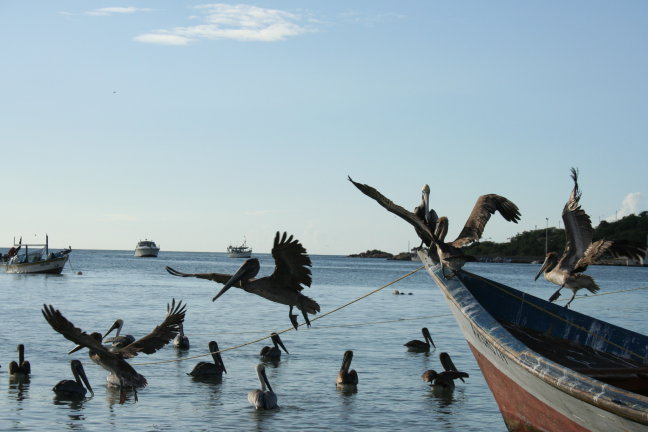 Pelikanen als goddelijke dienaren