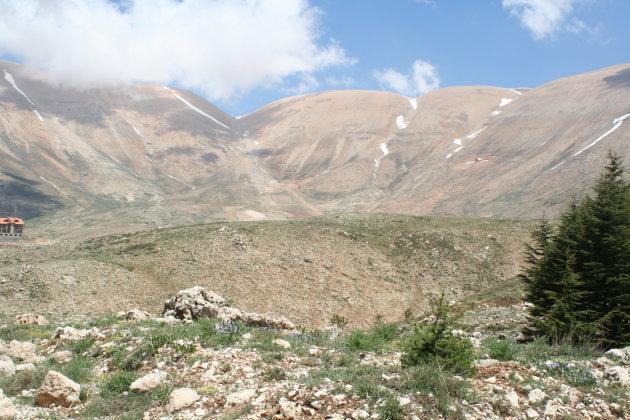 De ceders van Libanon