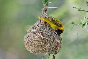 Nest inspectie