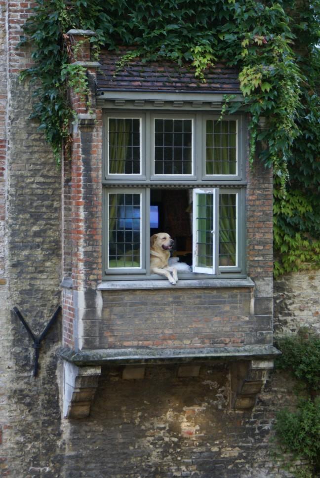 Hond in raam