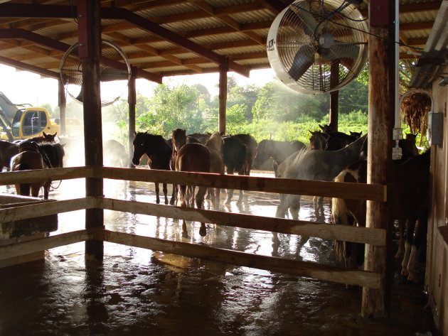 Ranch in the rainforest