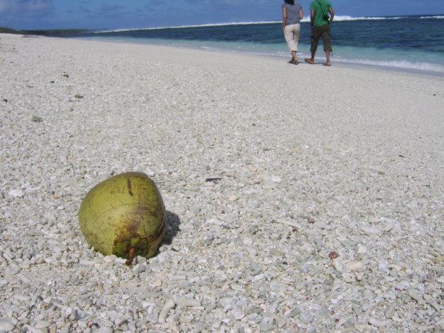 Verdwaalde kokosnoot