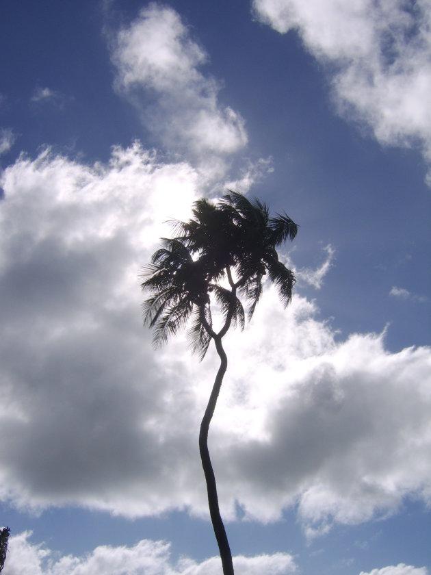 Bijzondere palmboom