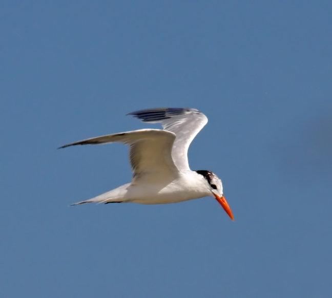 Bonaire bird 2!!!!