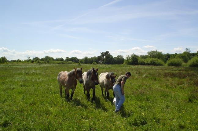 ponys voederen