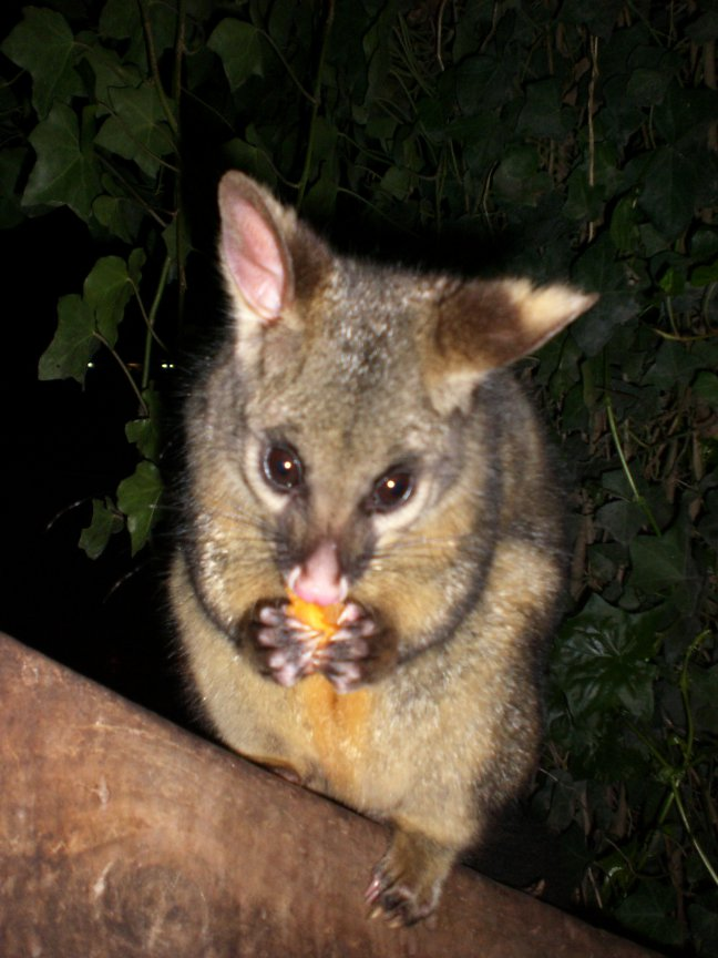 Feed the possums!!!
