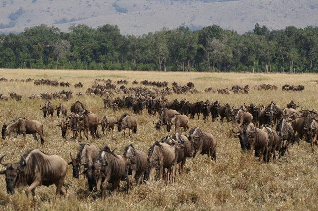 Op weg naar de Mara Rivier
