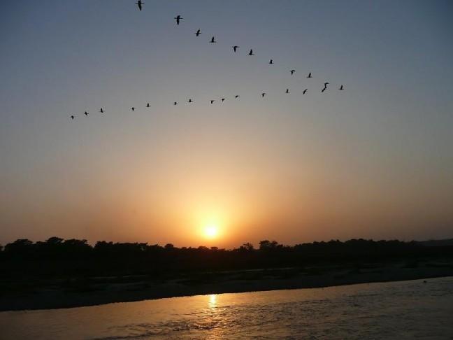 Zonsondergang in Chitwan, met vogels