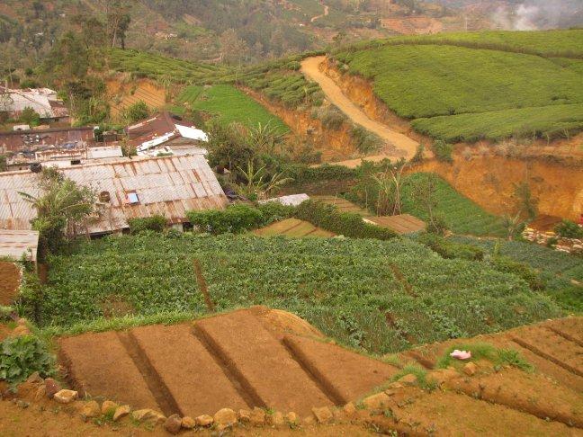 Theeplantages van bovenaf gezien