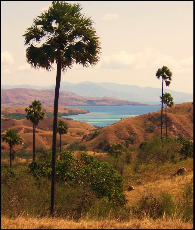 Ongerept Indonesië
