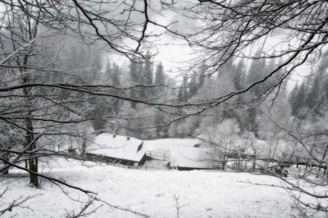 in a winter net's
