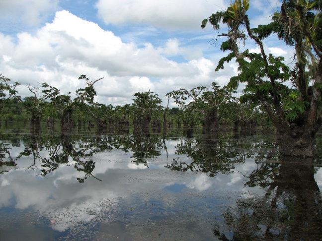 Prachtig meer in Cuyabeno np