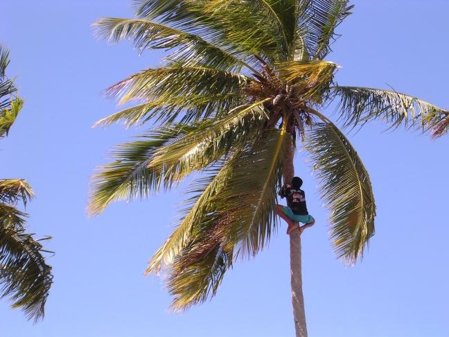 Klimmen voor kokosmelk