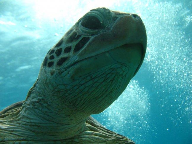 Close up schildpad