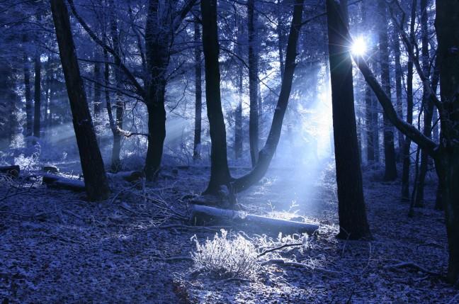 IJskoud in het bos op de Veluwe