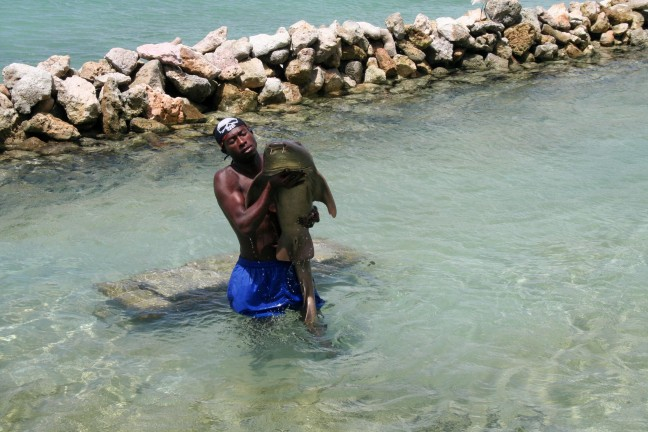 Jamaicaan met haai