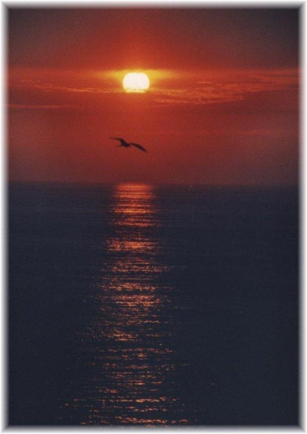Ondergaande zon met pelikaan.