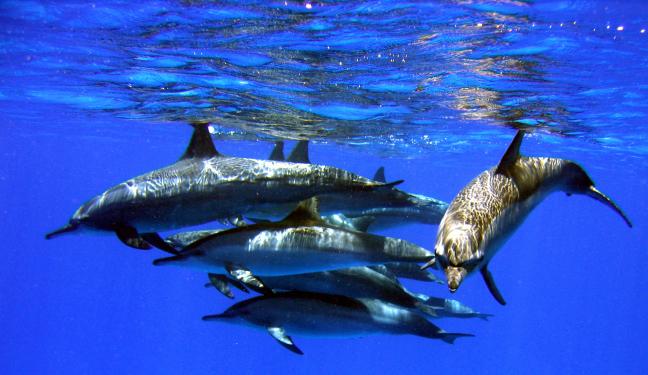 dolfijnen spiegeling