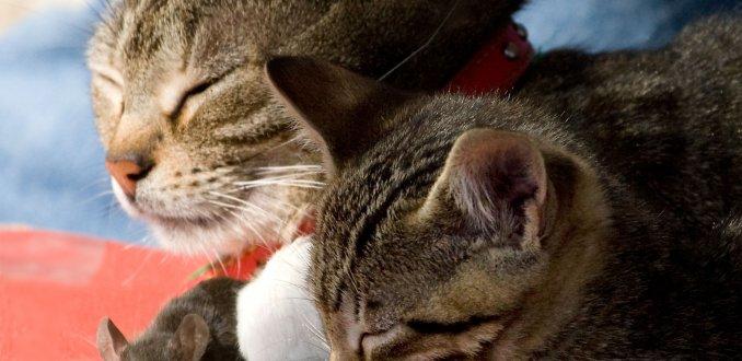 Liefde tussen dieren