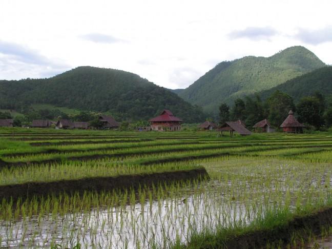 Pai, rijstvelden
