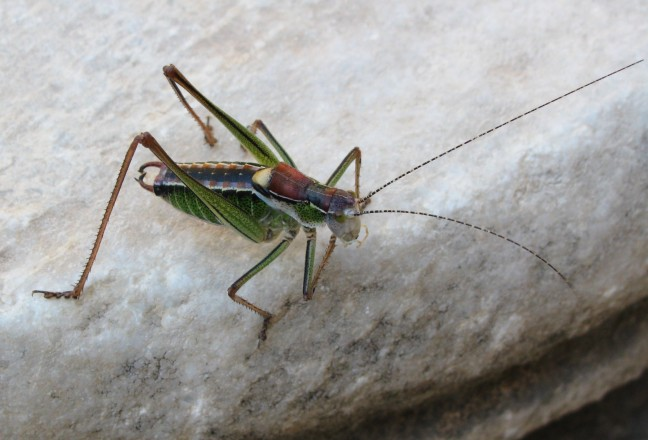 mooi insect