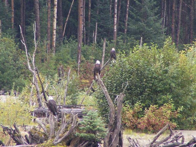 bald eagles playground