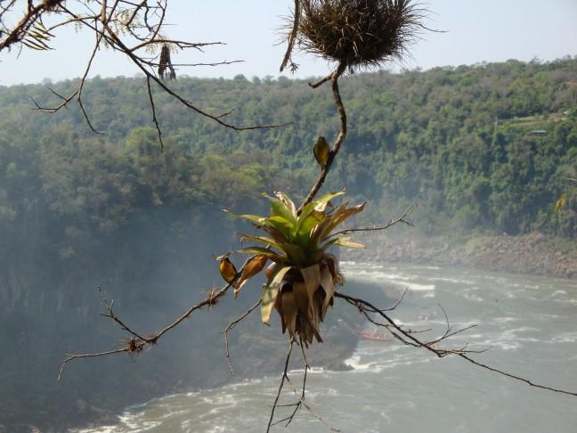 Nestelende vogeltjes boven watervallen Iguazú