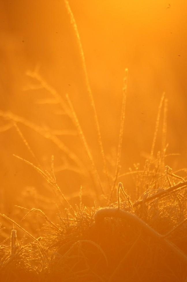 koude zon