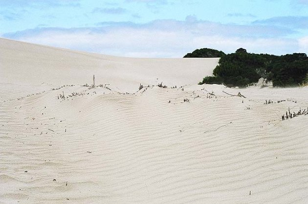Little Sahara op Kangaroo Island