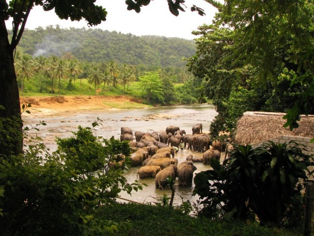Olifantenweeshuis