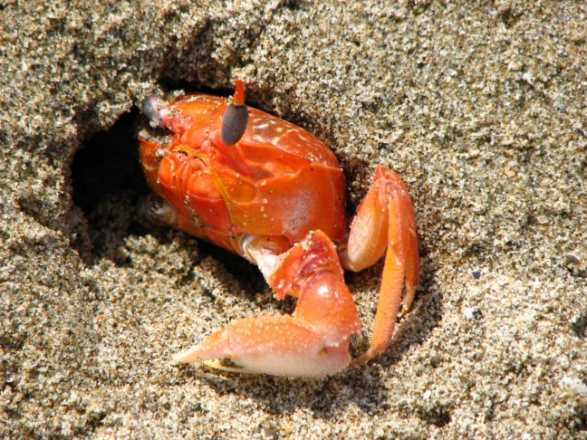 Kleurrijke krab