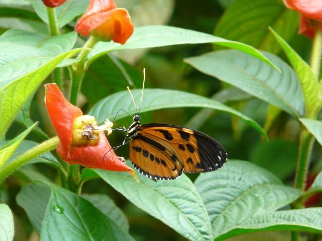 Nu nog een vlinder