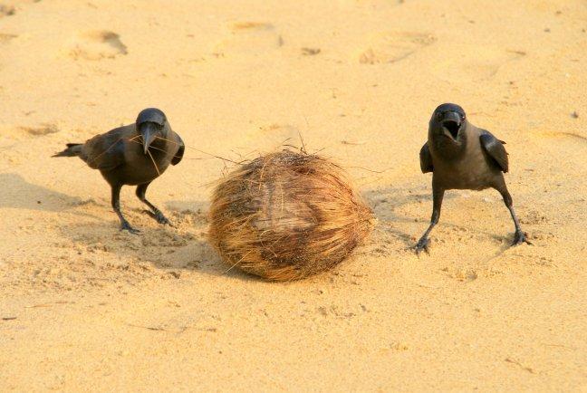nestje bouwen?