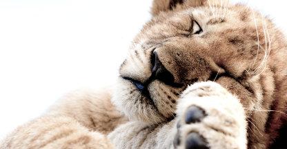 Slaapkop