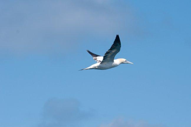 Vogel in de vlucht