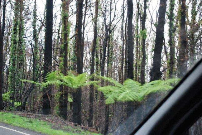 King lake herstel forest