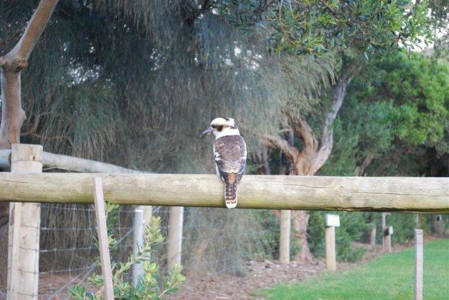 Vogel op camping Kennett River