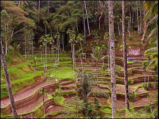 Keliki-wandeling Ubud