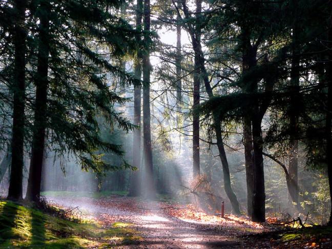 Zonnestralen in het bos !!!