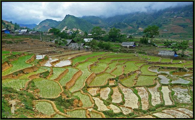 Rijst in de mist