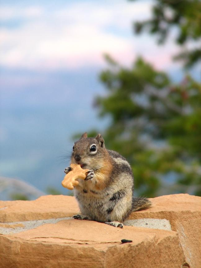 Brutale eekhoorn